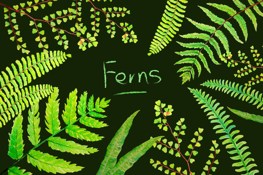 watercolour green fern, green leaf, leaf illustration