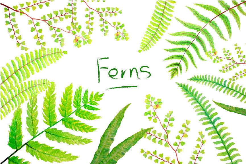 watercolor fern illustration, watercolour leaf, green leaf, leafy