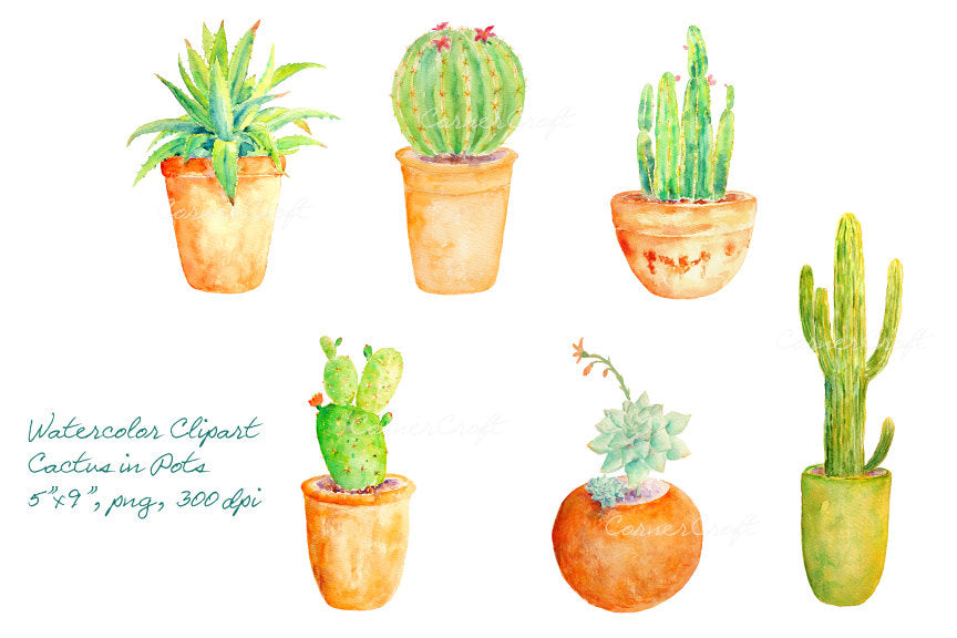 watercolor cactus in terracotta pots, cactus illustration