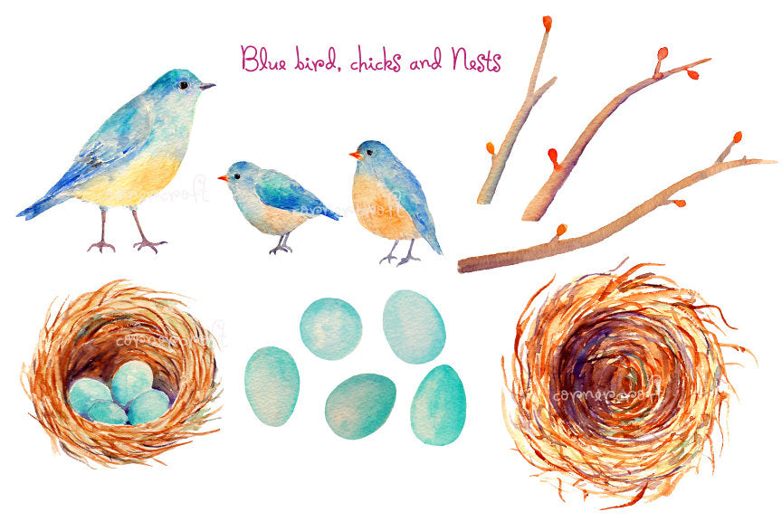 Hand painted watercolor birds - blue bird, chicks, bird nest with eggs, empty bird nest, eggs and tree branches for instant download
