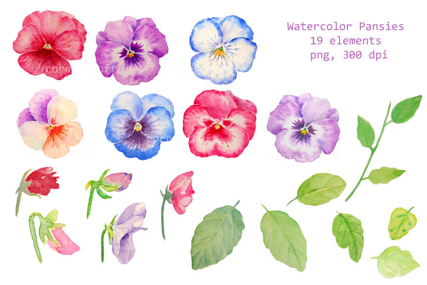 watercolor pansy illustration, pink pansy, blue pansy, red pansy, spring flower, digital download