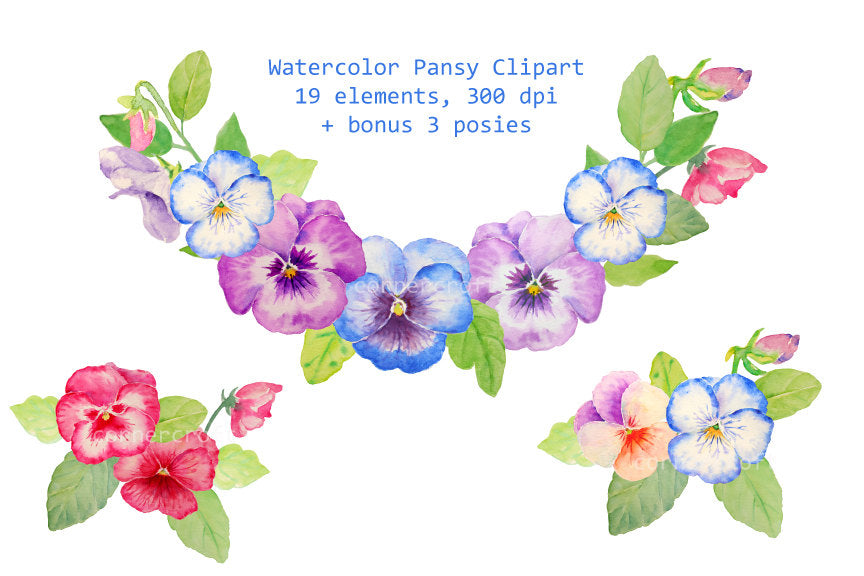 watercolor pansy clipart, pansy illustration, digital files