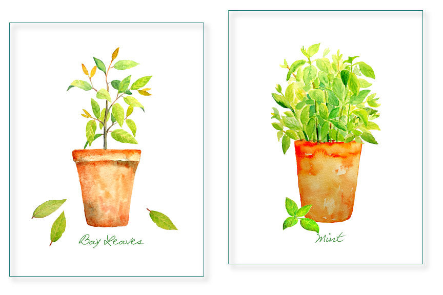 watercolor clipart mint, bay leaves and thyme in pots, pot herb botanical illustration