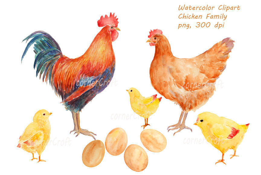 watercolor clipart chicken family, rooster, hen, eggs, chicks. bird illustration