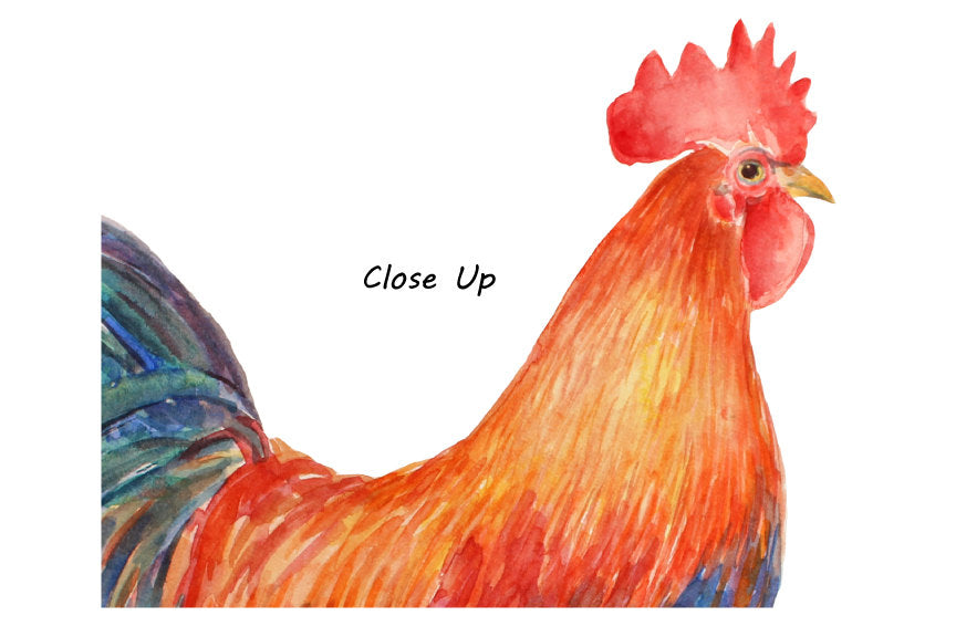 rooster close up, watercolor clipart, chicken family,