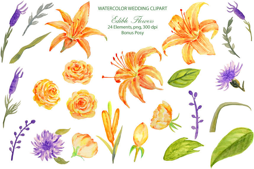 Edible flower clipart, watercolor day lily, roses, corn flowers,lavenders and leaves