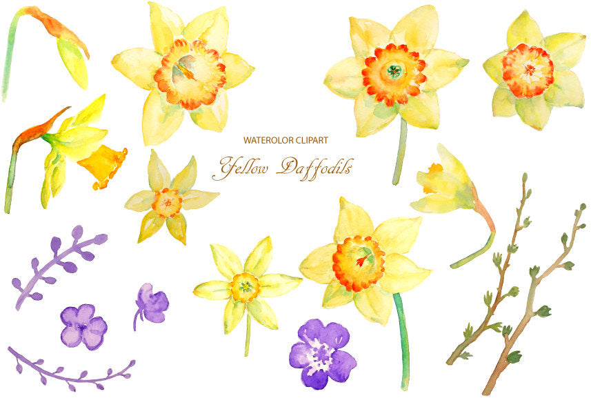 Watercolor Sprint Flower Yellow Daffodils Instant Download Corner
