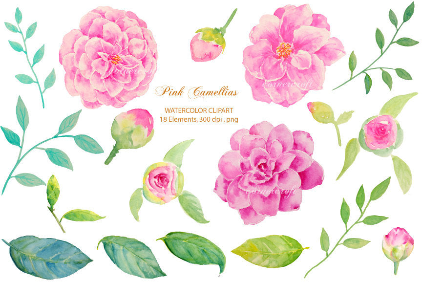 watercolor floral posy, pink camellia, botanical painting