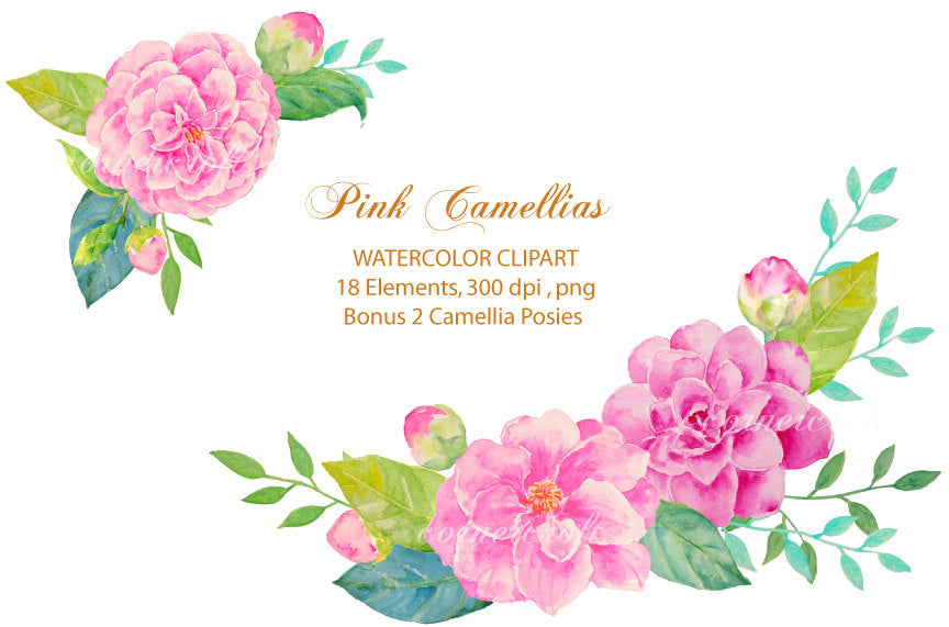 watercolor clipart pink camellia, detailed camellia flowers, pink flower illustration