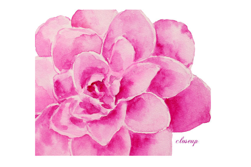 watercolor clipart pink flower, camellia illustration