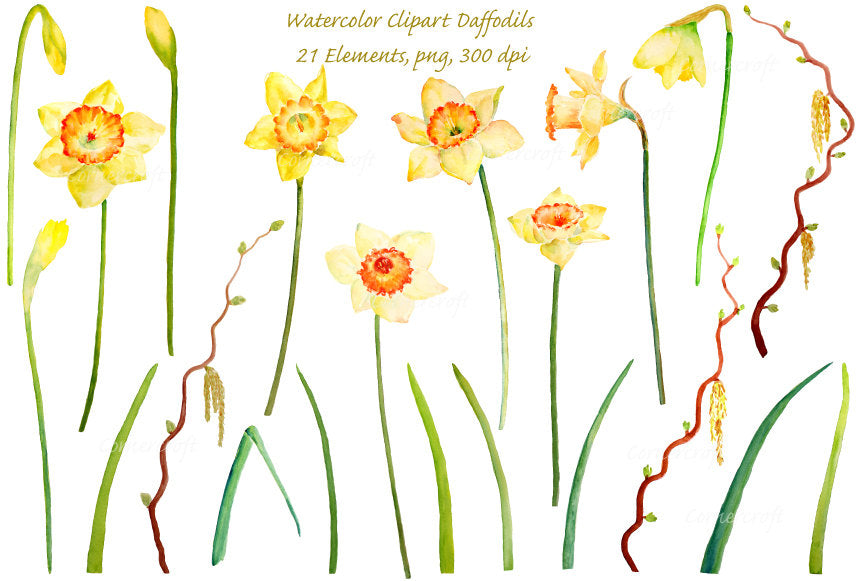 Watercolor Clipart Yellow Daffodils With Long Stems Instant Download