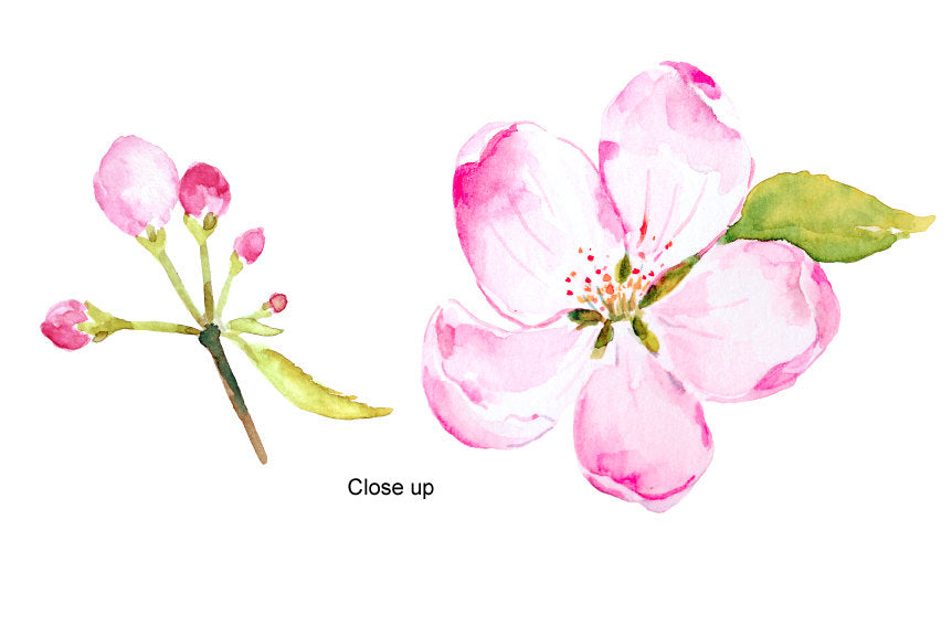 watercolor illustration apple flowers, apple blossoms, pink flower, apple flower elements, corner croft,
