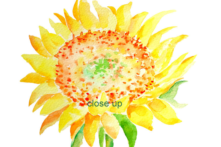 watercolor sunflower clipart, sunflower illustration, yellow flower clipart