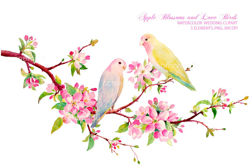 watercolor clipart pink apple blossom and love birds