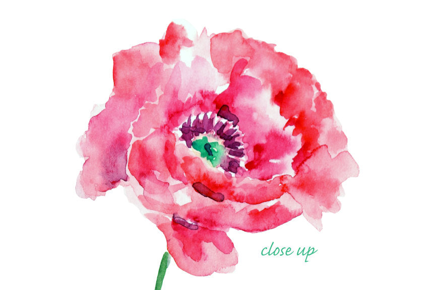 watercolor purple poppy clipart, purple oriental poppy illustration