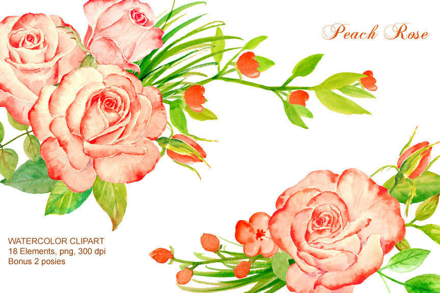 Hand painted watercolor peach roses, salmon pink roses, flower buds and leaves for instant download