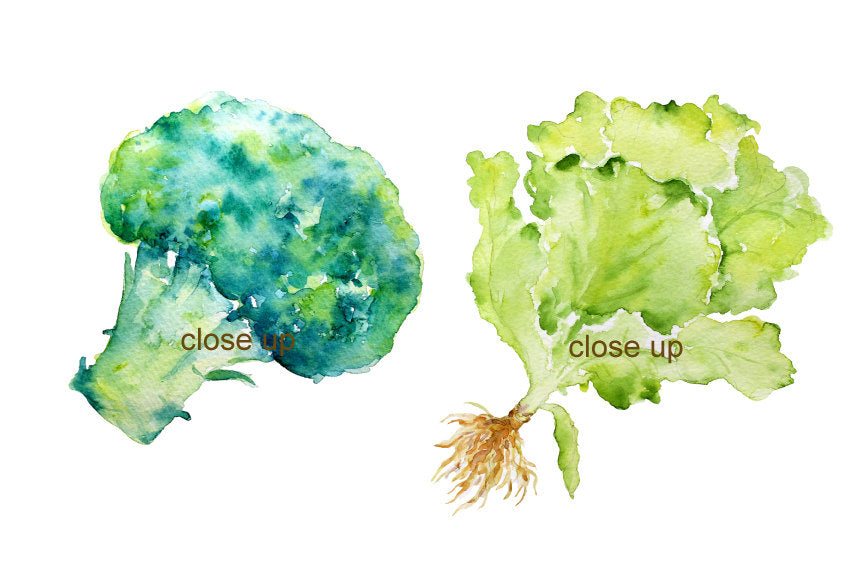 watercolour clipart, garden growth, food illustration, lettuce, leeks, aubergine, cabbage, broccoli