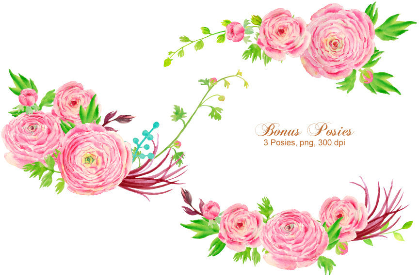 watercolor clipart pink ranunculus flowers, pink flower elements, ranunculus illustration