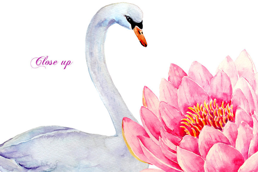 watercolor clipart water lily waterlily and white swan, instant download, wedding invitation