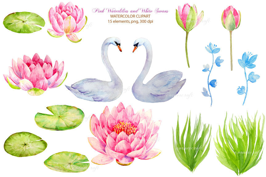 watercolor illustration white swan, heart, pink waterlily instant download