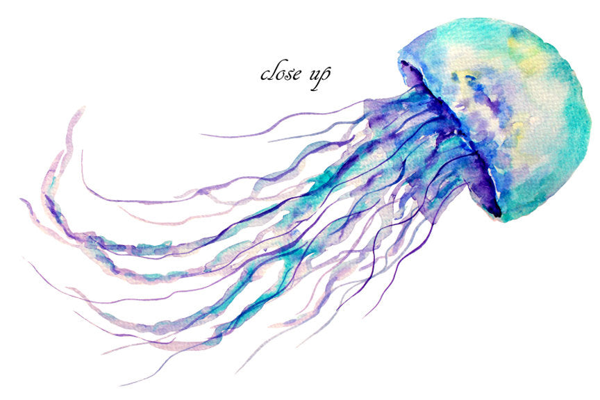 watercolour jellies, watercolor jellyfish, sea illustration,