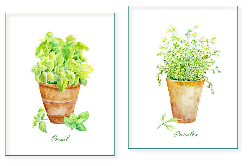 Hand painted watercolor herbs basil, sage and parsley in terracotta pots for instant download.