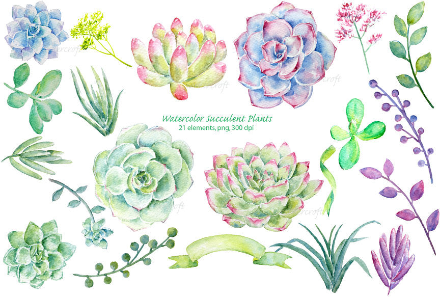 watercolor clipart succulent plants, detailed watercolor illustration