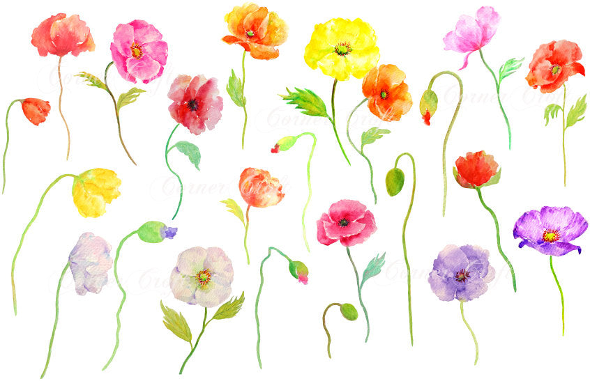 colourful poppy clipart, hand painted watercolor poppy