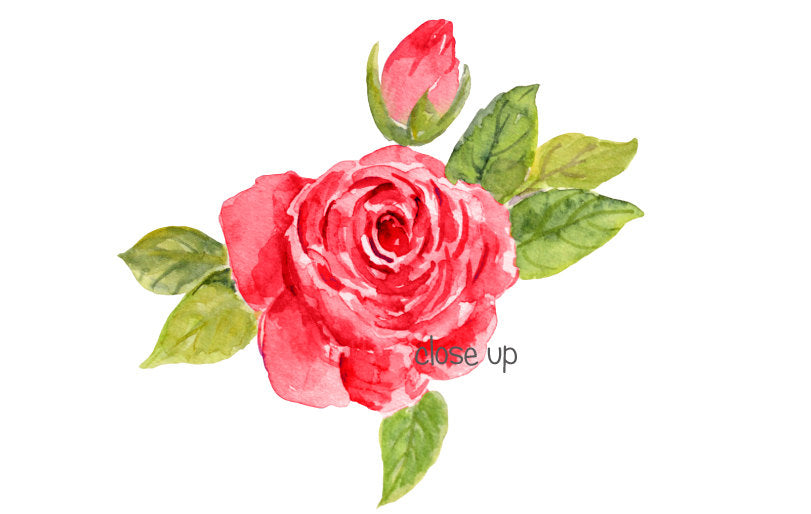 watercolor red rose, rose clipart, wedding rose