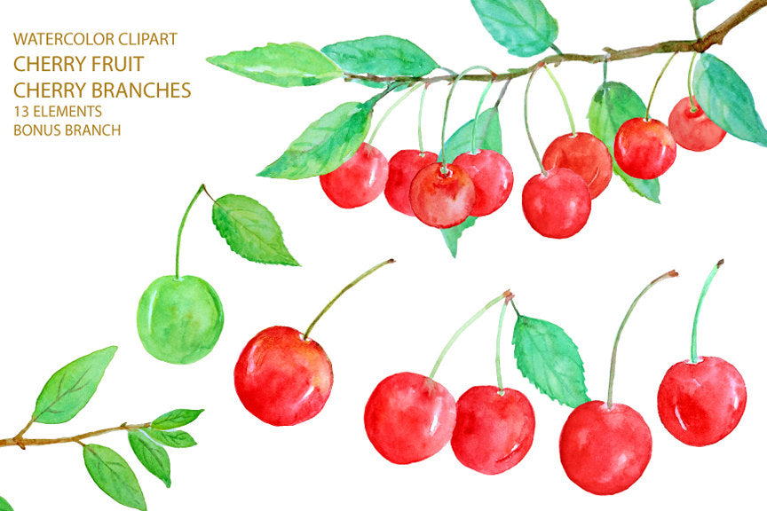 Watercolor cherry clipart, cherry illustration, red cherry, red cherries, cherry fruit, digital download
