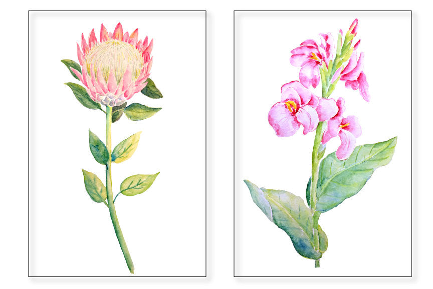 watercolor illustration canna lily, bird of paradise, adenium and protea.