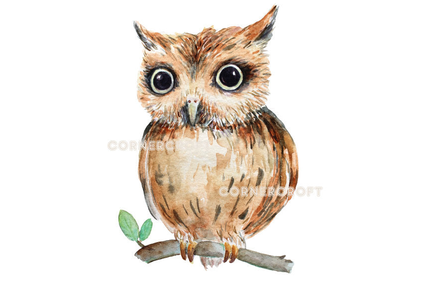 brown owls, little owls and barn owls, owl illustration, watercolor owls