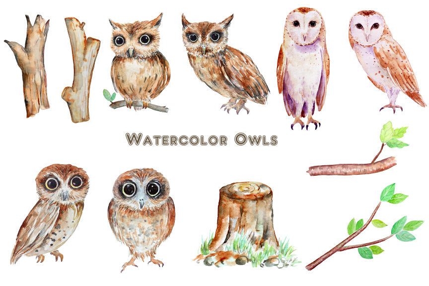 watercolor owl illustration, owl clipart, instant download