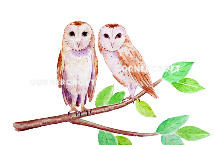 watercolor barn owl illustration, instant download