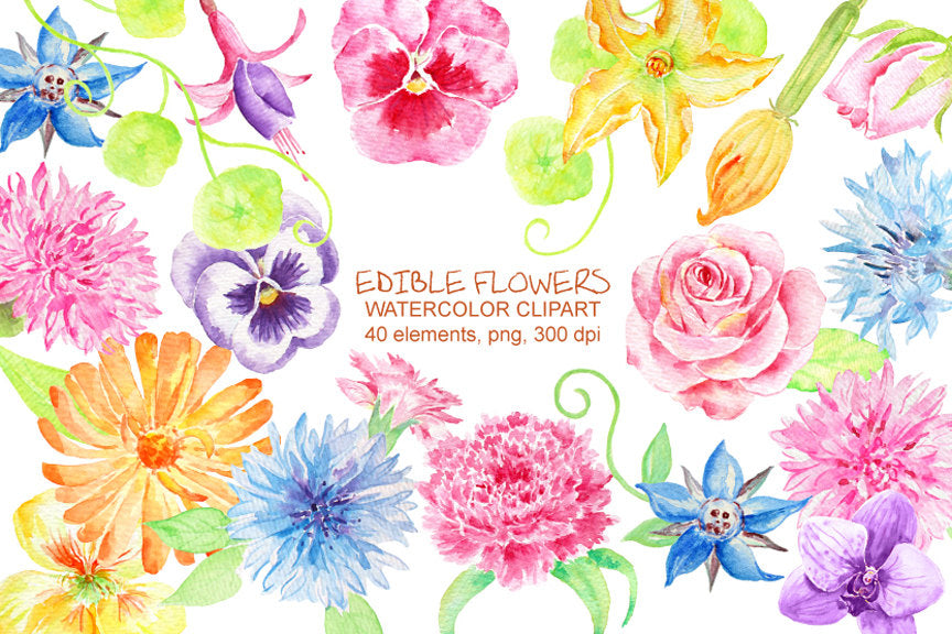 Watercolor edible flowers, garden flowers, watercolor clipart, pansy, rose, food,