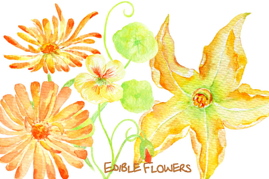 watercolor clipart of edible flowers, digital edible flowers, rose, pansy, courgette flower, marigold
