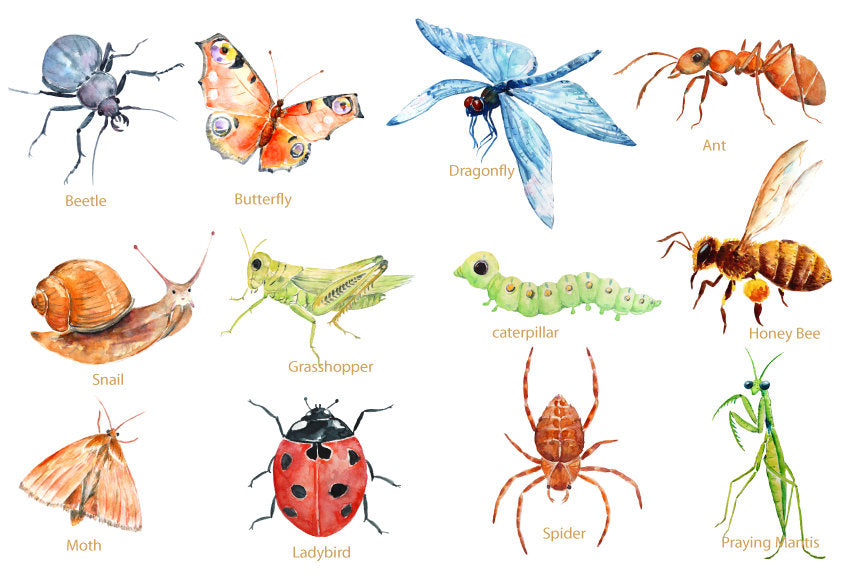 Digital file of watercolor ant, caterpillar, ladybird, dragonfly, grasshopper, praying mantis, honey bee, moth, snail, beetle, butterfly and spider