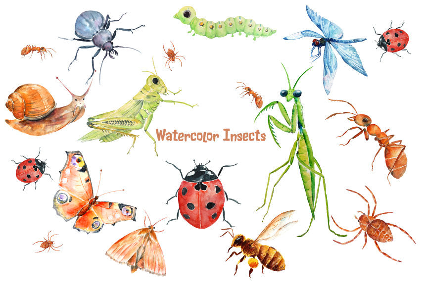Watercolor illustration of ant, caterpillar, ladybird, dragonfly, grasshopper, praying mantis, honey bee, moth, snail, beetle, butterfly and spider