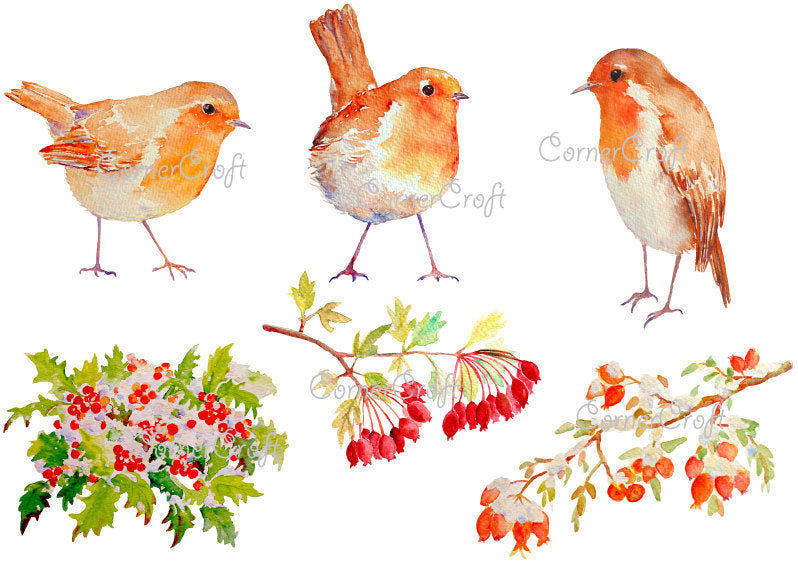 Watercolor clipart Christmas robin, redbreast robin, European robin. berries