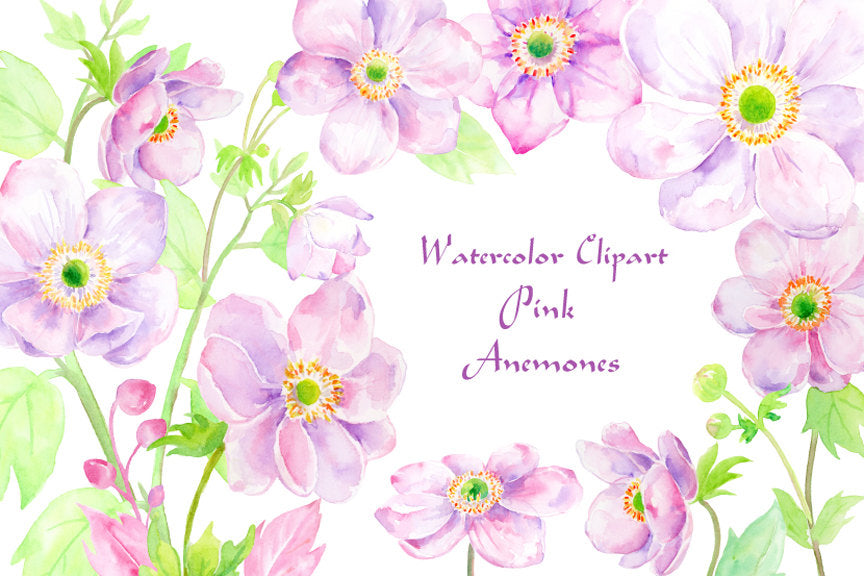 Watercolor Illustration anemones, pink anemones, anemone, anemone illustration