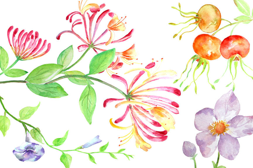 Watercolor hedgerow berry and wild flower, honeysuckle