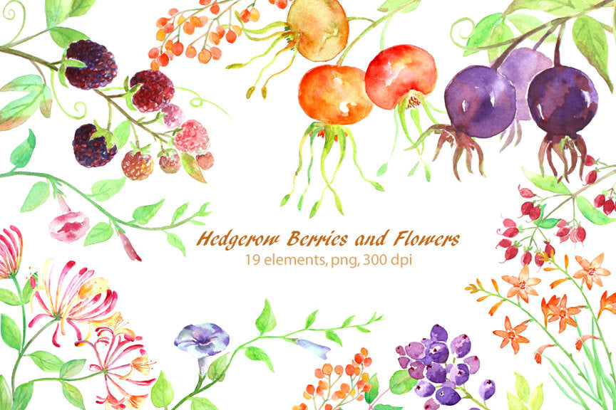 Watercolor hedgerow berry and wild flower, watercolor clipart instant download