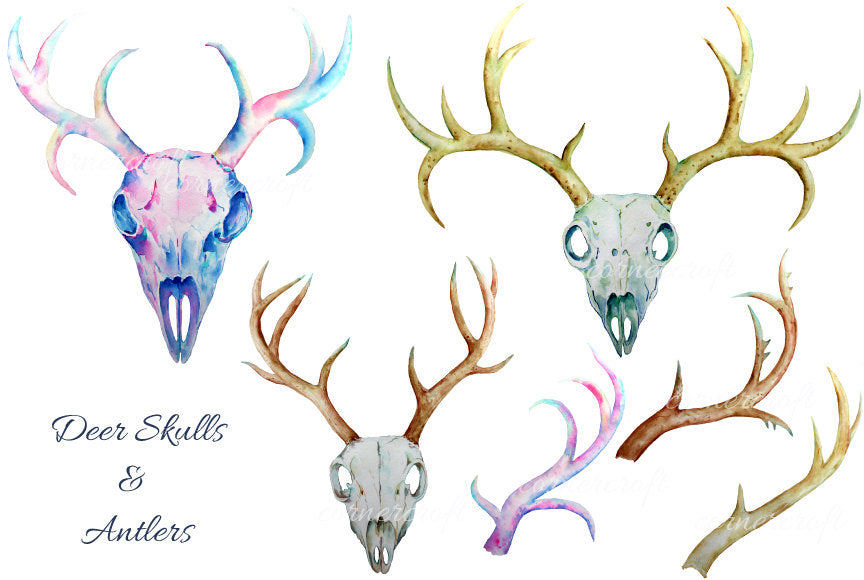 Deer Skull clip art - watercolor deer skulls and antlers printable instant download