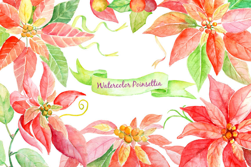 watercolor illustration poinsettia, detailed painting of poinsettia, instant download, red poinsettia