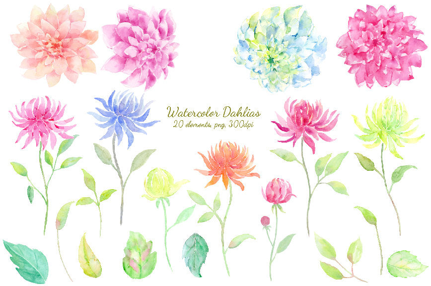 Watercolor dahlias in pink, blue, yellow and purple and leaves, summer flowers for instant download, they are perfect for making custom wedding invitations, wedding cards and greeting cards.