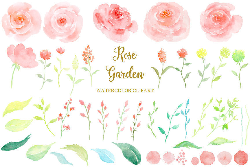 watercolour pink roses, rose garden, watercolor clipart, soft pink flower