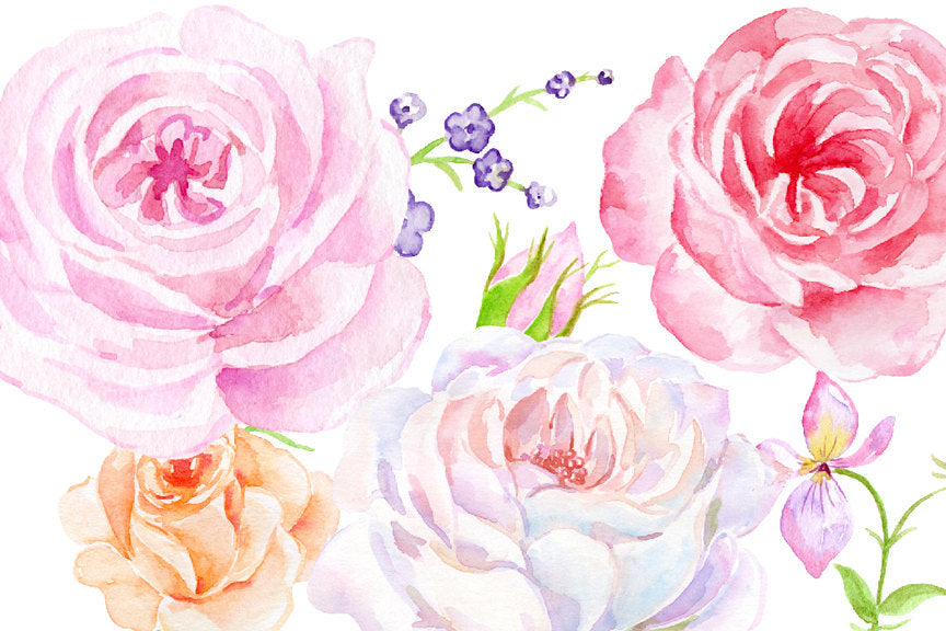 Watercolor vintage rose collection, classic rose digital download