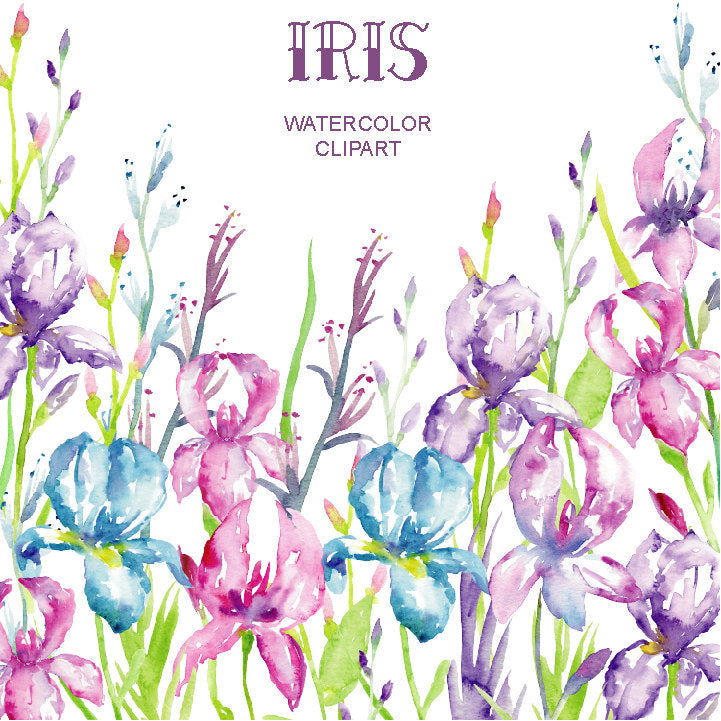 watercolor illustration, blue iris, purple iris, instant download
