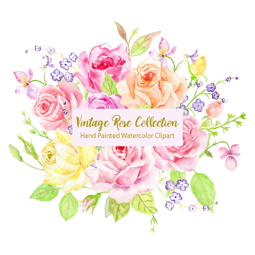 Watercolor vintage rose collection, watercolor clipart, classic roses, pink, peach roses