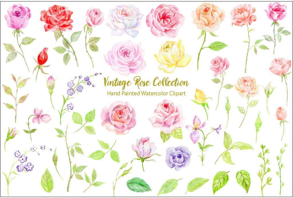 watercolor roses for instant download, famine flowers, floral arrangement, corner croft artwork.